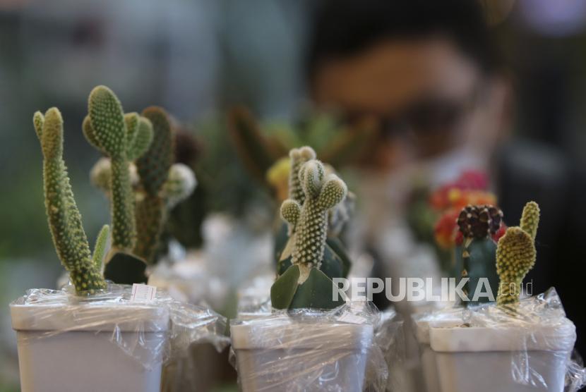 Pengunjung mengamati tanaman kaktus yang dipajang di salah satu stan pameran.