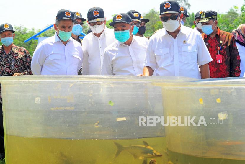 Menteri Kelautan dan Perikanan (MKP) Sakti Wahyu Trenggono (kanan) didampingi Dirjen Perikanan Budidaya Slamet Soebjakto (kedua kanan) dan Direktur Pemantauan dan Operasi Armada PSDKP Pung Nugroho (kiri) melihat ikan patin yang dibudi dayakan di Balai Perikanan Budidaya Air Tawar (BPBAT) Sungai Gelam, Muarojambi, Jambi, Jumat (23/4/2021). Menteri Sakti Wahyu Trenggono mendorong BPBAT Sungai Gelam yang merupakan Koordinator Pusat Pengembangan Ikan Patin Nasional (PUSTINA) untuk mengembangkan kampung-kampung perikanan budi daya baru di daerah itu.