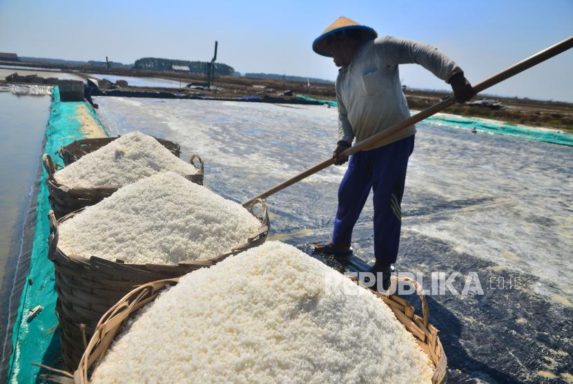 Petani memanen garam di area tambak garam Desa Kedungmalang, Jepara, Jawa Tengah, Rabu (28/7/2021). Petani garam setempat mengaku musim panen garam saat ini mundur dari Maret menjadi Juli akibat anomali cuaca dan diperkirakan produksi garam akan menurun.