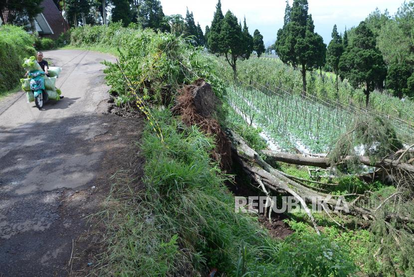 Warga melewati pohon tumbang akibat angin kencang karena cuaca ekstrem (ilustrasi)