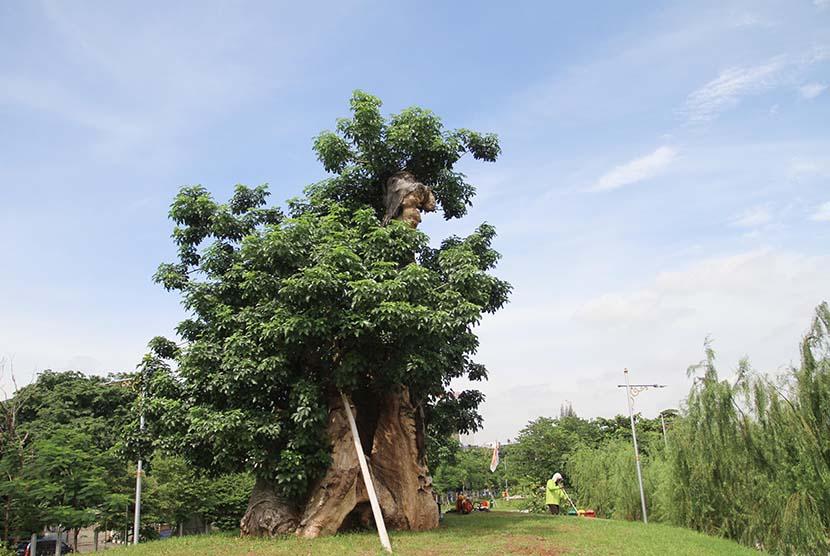 Pohon untuk penghijauan