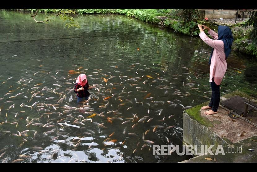 Wisatawan memberi makan ikan-ikan di mata air Umbul Senjoyo, Desa Tegalwaton, Tengaran, Kabupaten Semarang, Jawa Tengah, Rabu (21/12/2018).