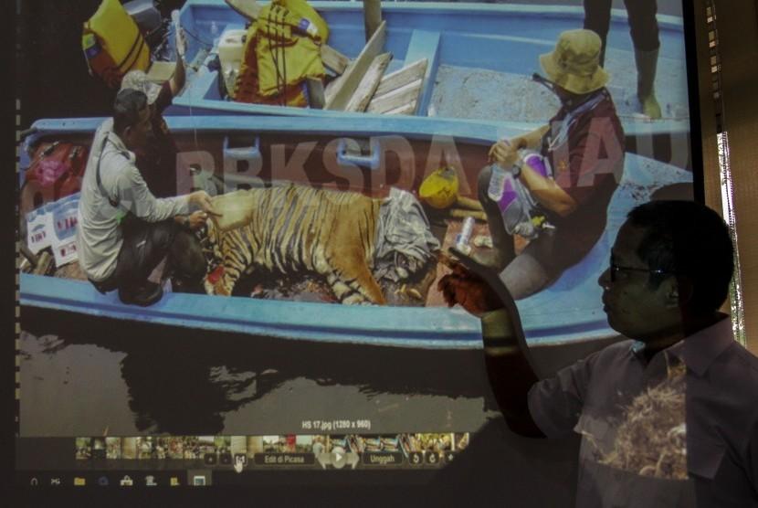 Kepala Balai Besar KSDA Riau Suharyono menjelaskan kronologis penyelamatan satwa liar Harimau Sumatera yang terkena jerat ketika konfrensi pers di Kantor BBKSDA Riau di Pekanbaru, Riau, Selasa (26/3/2019).