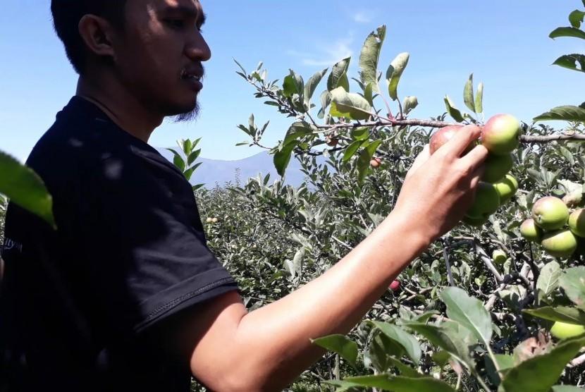 Suasana wisata kebun apel di New Mitra Apel, Kecamatan Batu, Kota  Batu, Jawa Timur, Sabtu (30/3).