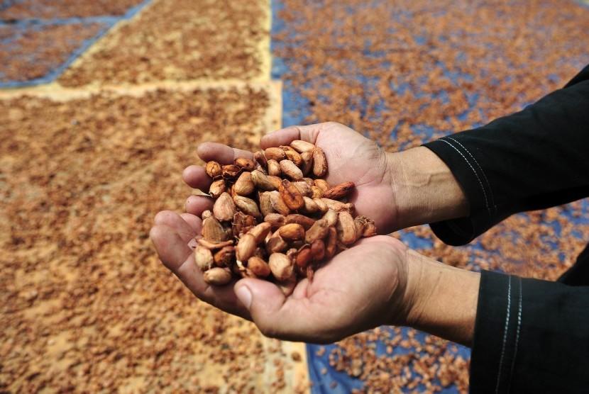 Warga menunjukkan biji kakao saat proses penjemuran di Teluk Raya, Kumpeh Hulu, Muarojambi, Jambi, Jumat (19/4/2019).
