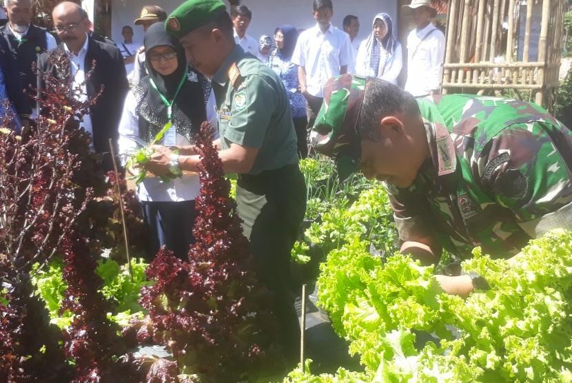 Jajaran pegawai Balitsa Lembang, Kementerian Pertanian dan Koramil memanen  sayuran hasil menanam di lahan pekarangan balitsa, Rabu (18/6). Kegiatan  tersebut bagian dari program Opal Kementerian Pertanian.