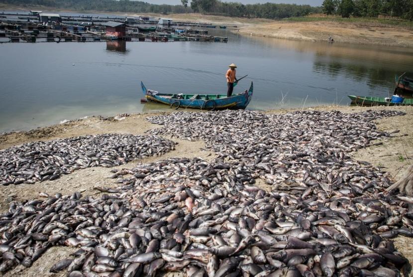 Pembudidaya ikan keramba Waduk Kedung Ombo memindahkan ikan mati dari keramba di Desa Ngasinan, Sumberlawang, Sragen, Jawa Tengah, Senin (1/7/2019).