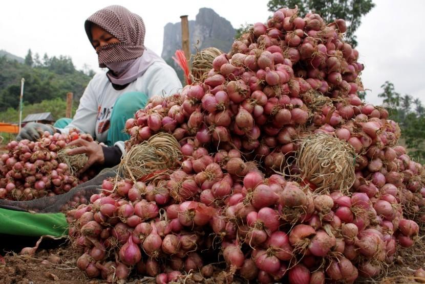 Petani membersihkan bawang merah usai dipanen di Desa Salu Dewata, Kecamatan Anggeraja, Enrekang, Sulawesi Selatan, Senin (1/7/2019).