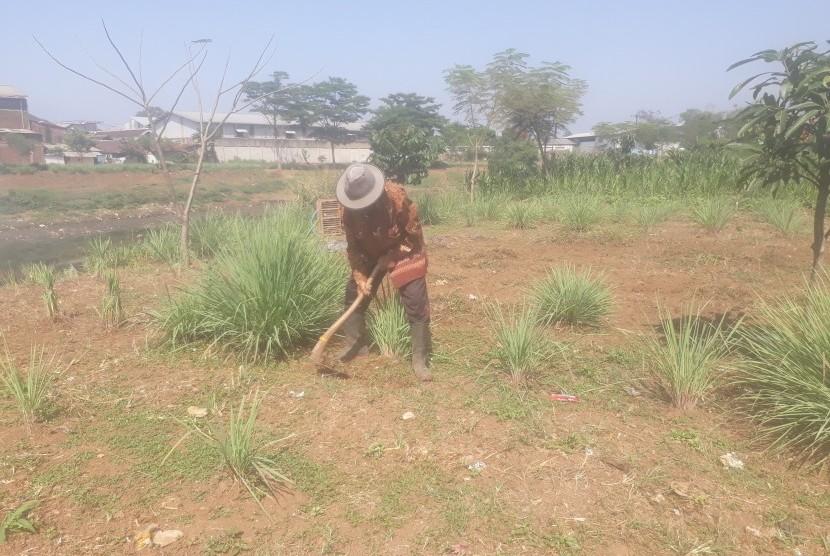 Sebagian masyarakat di bantaran sungai Citarum, tepatnya di Desa Cicukang,  Kecamatan Margahayu, Kabupaten Bandung memanfaatkan lahan yang ada saat  kemarau tengah berlangsung. Mereka banyak yang menanam pohon jagung dan  sereh dilahan di bantaran sungai