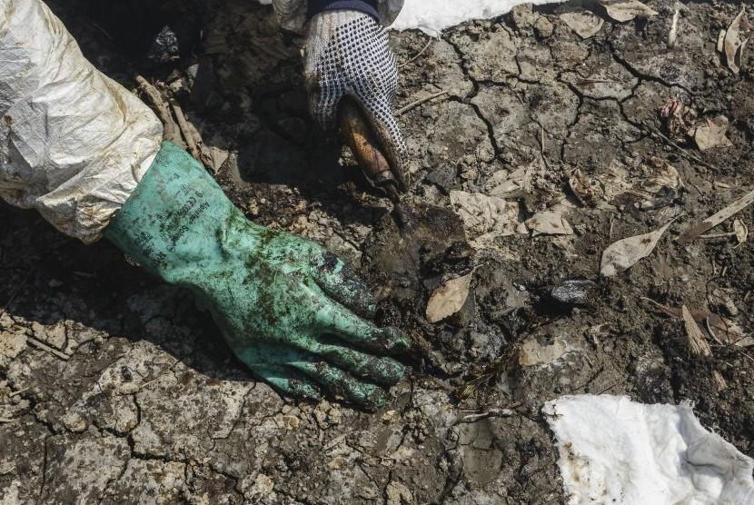 Petugas membersihkan sisa kebocoran minyak mentah Pertamina di kawasan ekosistem mangrove Desa Pantai Bahagia, Muaragembong, Kabupaten Bekasi, Jawa Barat, Selasa (6/8/2019).