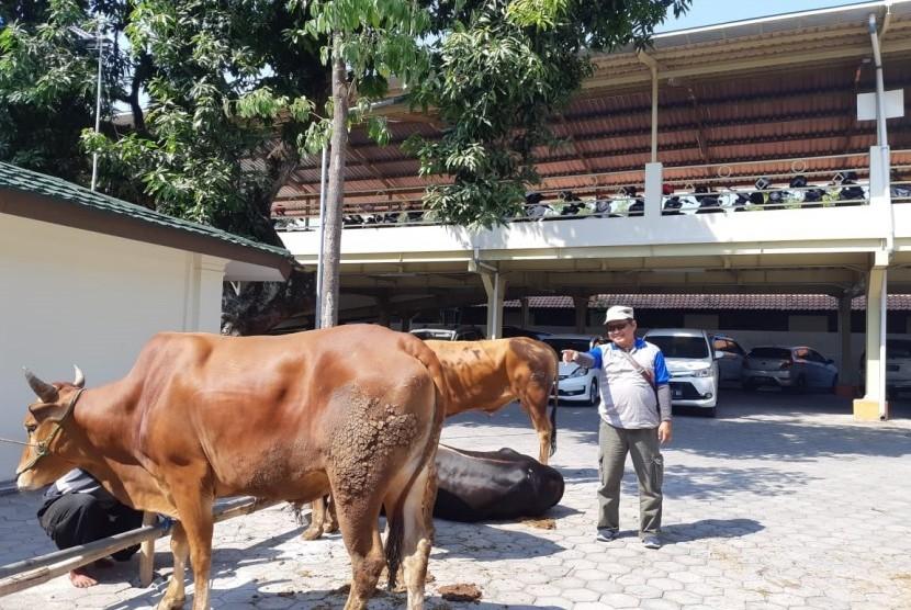 Ketua Panitia Kurban RS PKU Muhammadiyah Solo, Bekti Suharto, menunjukkan sapi-sapi kurban dari para dokter dan karyawan di RS PKU Solo, Senin (12/8). Pada hari tersebut, RS PKU Solo menyembelih 11 ekor sapi dan dikemas menjadi 2.000 bungkus untuk dibagikan kepada karyawan dan warga sekitar.