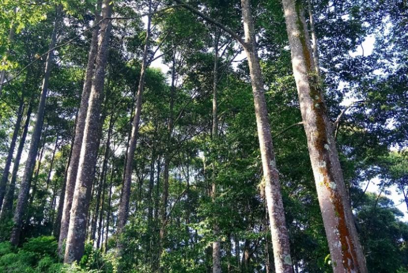 sistem perdagangan pohon penyelamat
