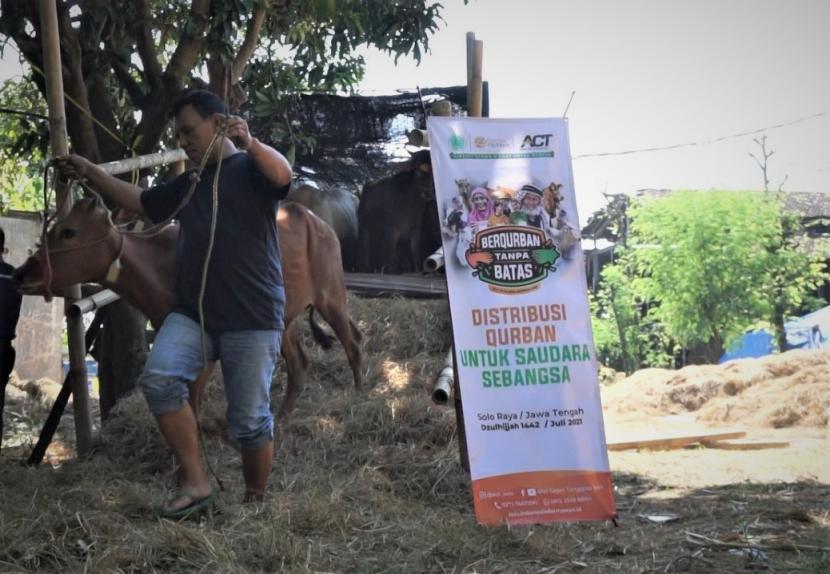 Aksi Cepat Tanggap (ACT) Solo mendistribusikan sebanyak 46 ekor sapi kurban untuk wilayah Solo Raya dalam momen Idul Adha 1422 H.