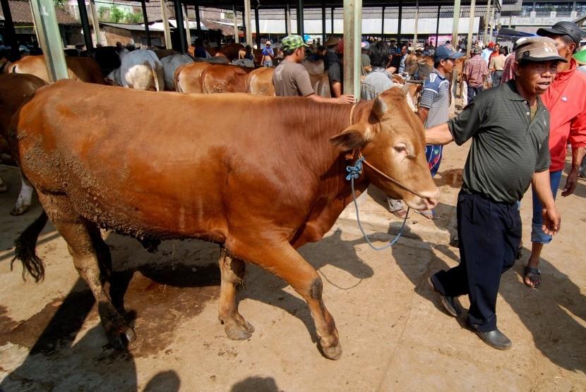 Aktivitas jual beli sapi di Pasar Hewan Pon, Ambarawa, Kabupaten Semarang, Jawa Tengah, Rabu (12/8).