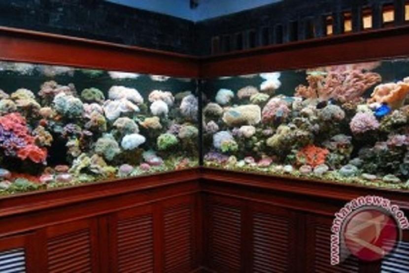 Kiat Merawat Ikan Hias Republika Online