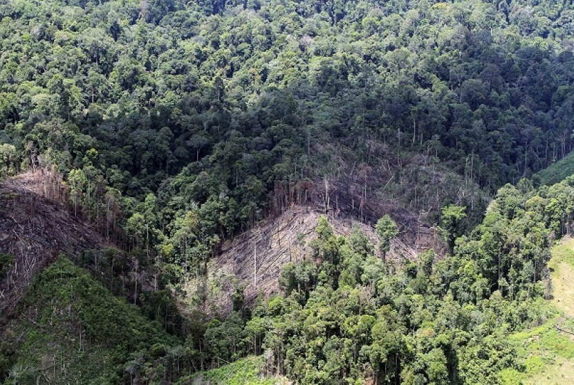 An aerial photo shows an area of illegal logging in forest buffers near National Park in Bukit Tigapuluh, Riau-Jambi. Illegal logging in the area has threatened its biodiversity and ecosystem. (file photo)