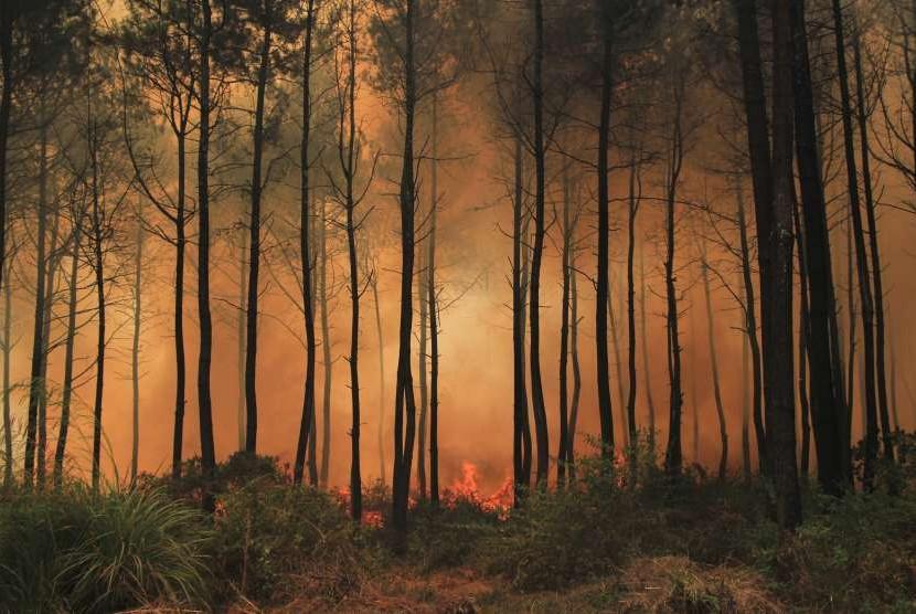 Api membakar kawasan hutan pinus di Taman Nasional Gunung Ciremai, Kuningan, Jawa Barat, Rabu (3/10).