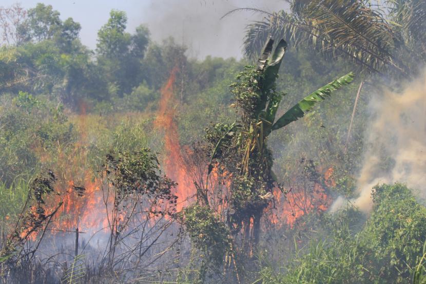 Api membakar semak belukar pada lahan kosong. (Ilustrasi)