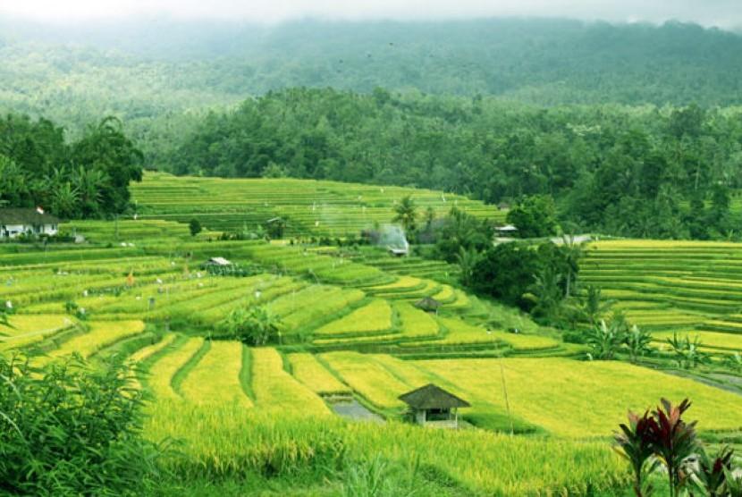 Area pertanian di Bali dengan sistem irigasi Subak (ilustrasi)