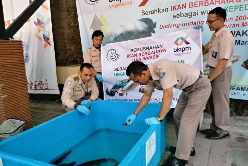 Badan Karantina Ikan, Pengendalian Mutu, dan Keamanan Hasil Perikanan (BKIPM) Yogyakarta memusnahkan 13 ekor ikan alligator dan 12 ekor ikan sapu-sapu, Selasa (7/8).