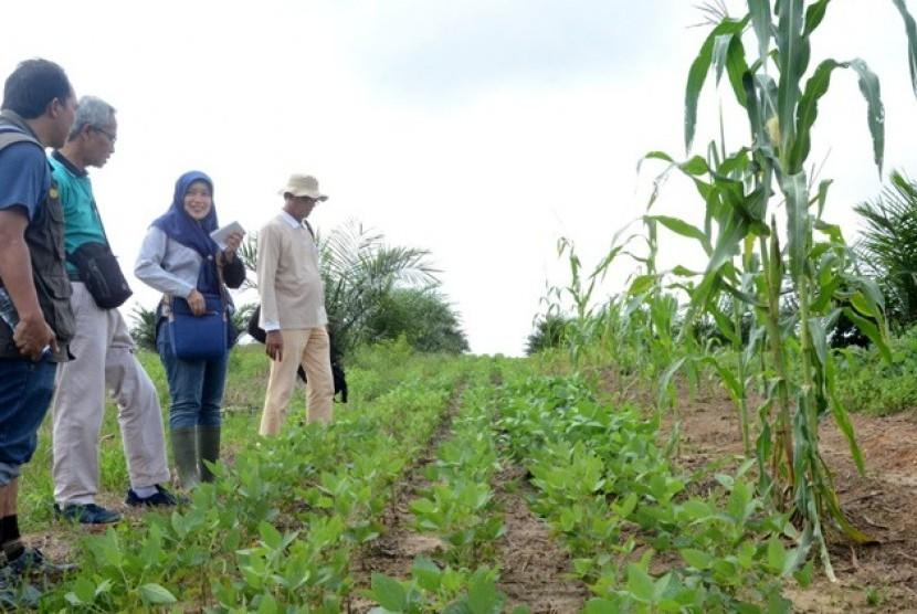 Badan Penelitian dan Pengembangan Pertanian (Balitbangtan) bekerjasama dengan Pusat Penelitian Kelapa Sawit (PPKS) mengembangkan padi, jagung, kedelai (pajale) di lahan sawit yang berada di Kebun Sarolangun, Jambi.