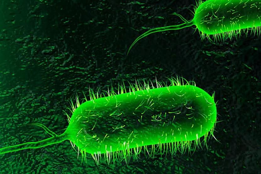 Bakteri kolera.