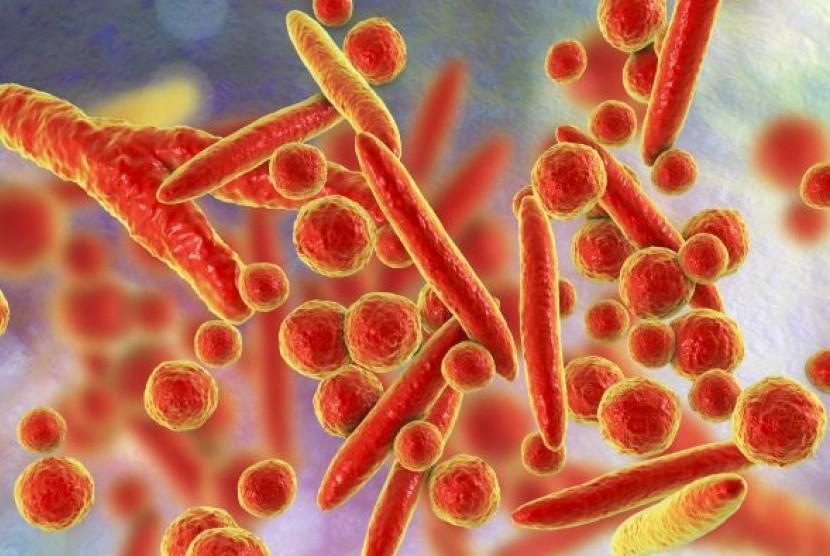 Bakteri mycoplasma penyebab pneumonia, infeksi pada alat kelamin dan saluran kemih.