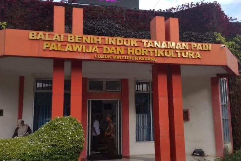 Balai Benih Induk Tanaman Padi Palawija dan Hortukultura.