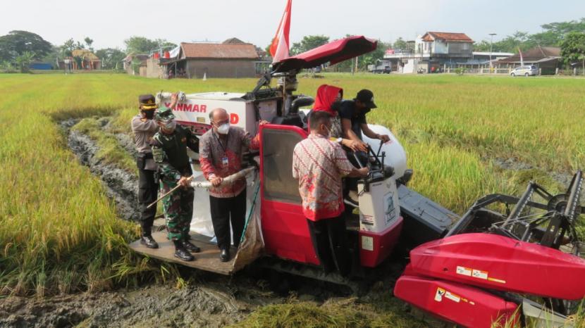 Panen raya padi di lahan pertanian (ilustrasi)