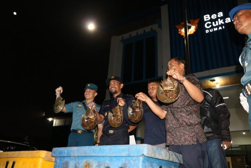 Bea Cukai Dumai, berkoordinasi dengan TNI AL Dumai, Karantina Hewan, dan Balai Besar Konservasi Sumber Daya Alam (BBKSDA), menegah penyelundupan hewan dilindungi jenis belangkas.