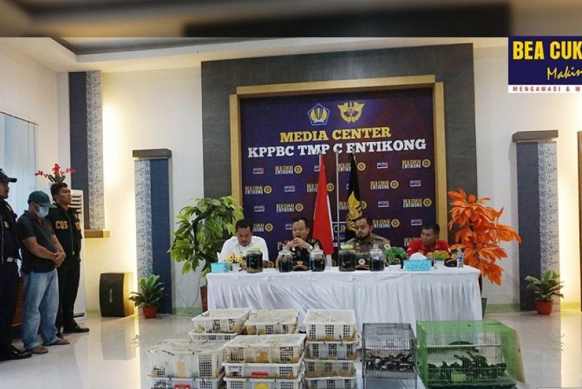 Bea Cukai Entikong menggelar konferensi pers penangkapan penyelundupan 440 ekor burung kacer asal Malaysia, pada Jumat (18/10).