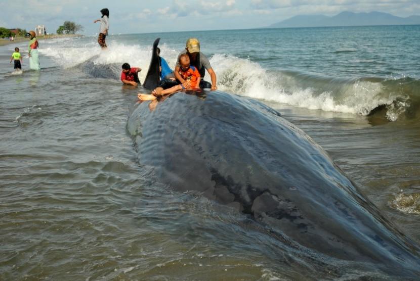 Bangkai ikan paus mati (ilustrasi).