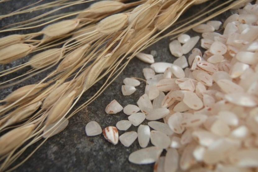 Ilustrasi beras. Pemerintah Kota Padang menerima bantuan beras sebanyak 12 ton yang diberikan oleh Anggota DPR-RI Muhammad Asli Chaidir sebanyak delapan ton, dan Masyarakat Tionghoa Peduli Covid-19 Sumbar sebanyak empat ton.