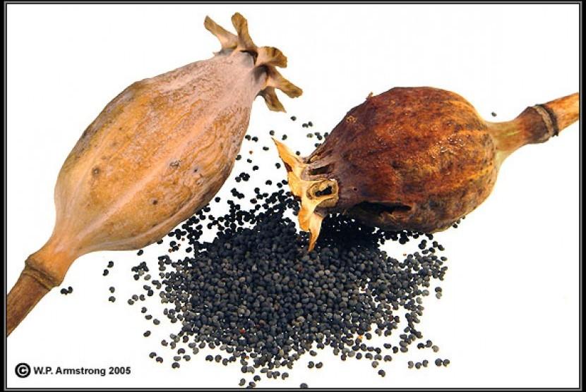 128 Kg Biji Opium Selundupan Tiga WN India Disita | Republika Online