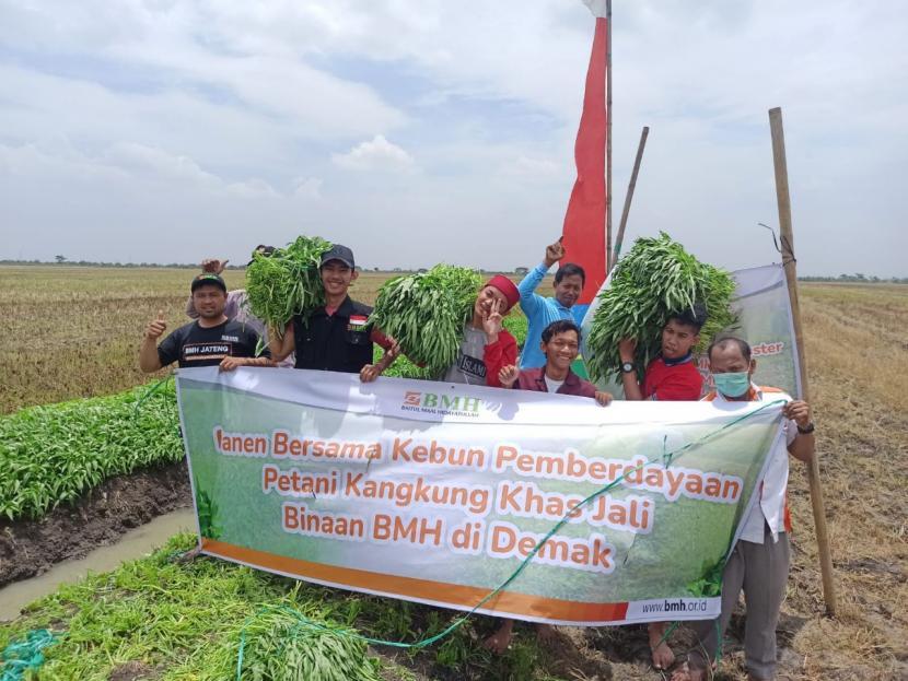 BMH menggelar panen kangkung khas jali bersama petani binaan  di Demak, Jawa Tengah, Rabu (22/9).