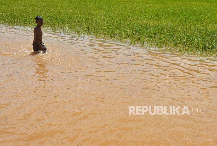 Bocah berjalan melintasi areal sawah yang terendam banjir di Desa Tanjungsari, Kabupaten Tasikmalaya, Jawa Barat, Jumat (23/2).