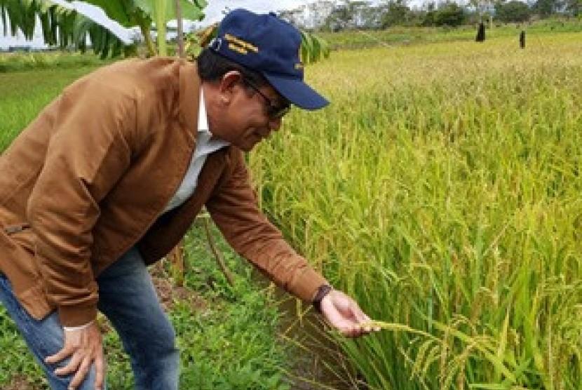 BPTP Balitbangtan Papua menggelar Bimbingan Teknik (Bimtek) Budidaya Padi Organik kepada petani di Kampung  Helalua, Distrik Asolokoba, Wamena.