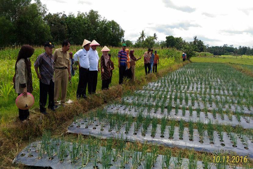 Upaya pembinahan padi unggul bagi petani. (ilustrasi)