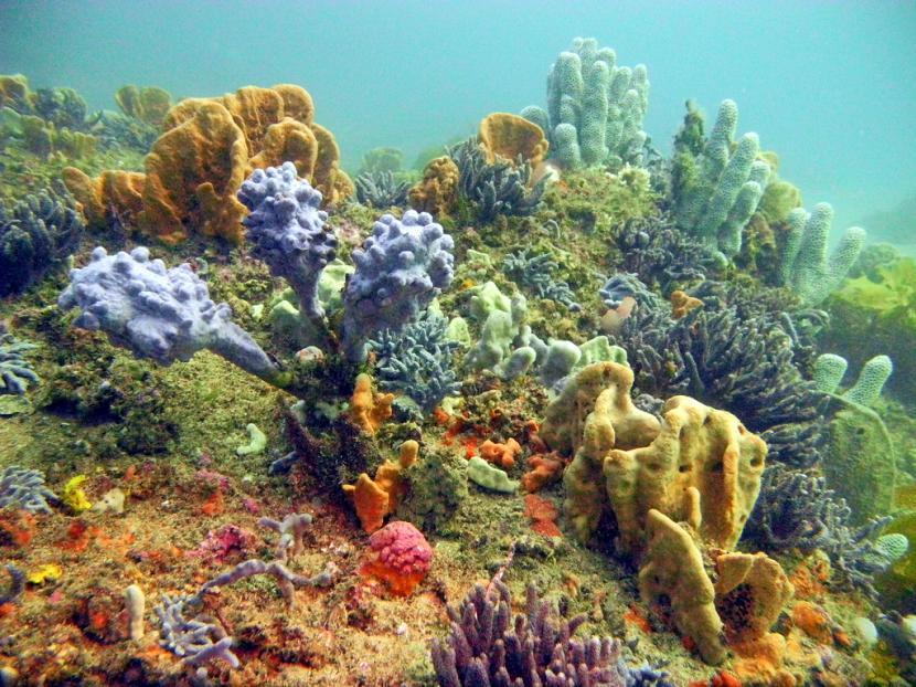 Penemuan bunga karang di Kanada mematahkan penemuan sebelumnya.