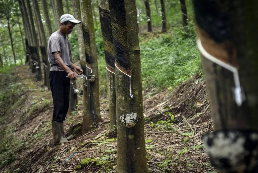Ilustrasi penyadapan getah dari pohon karet