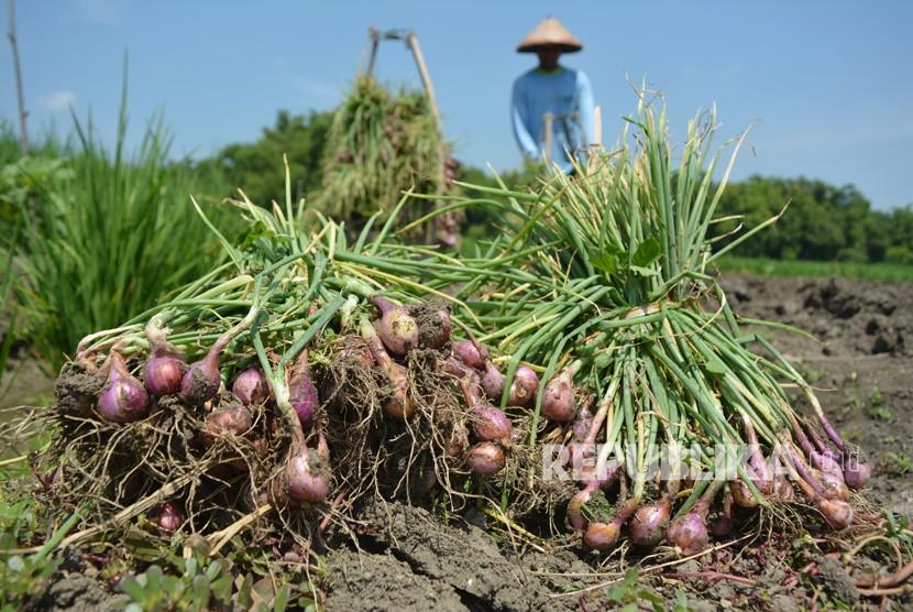 Buruh tani memanen bawang merah di Desa Tondowulan, Kecamatan Plandaan, Jombang, Jawa Timur, Senin (18/2/2019).