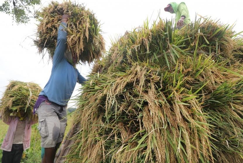 Produksi Beras Nasional: Buruh tani mengangkut padi ke dalam truk usai dipanen di area persawahan Desa Sekaran, Kediri, Jawa Timur.