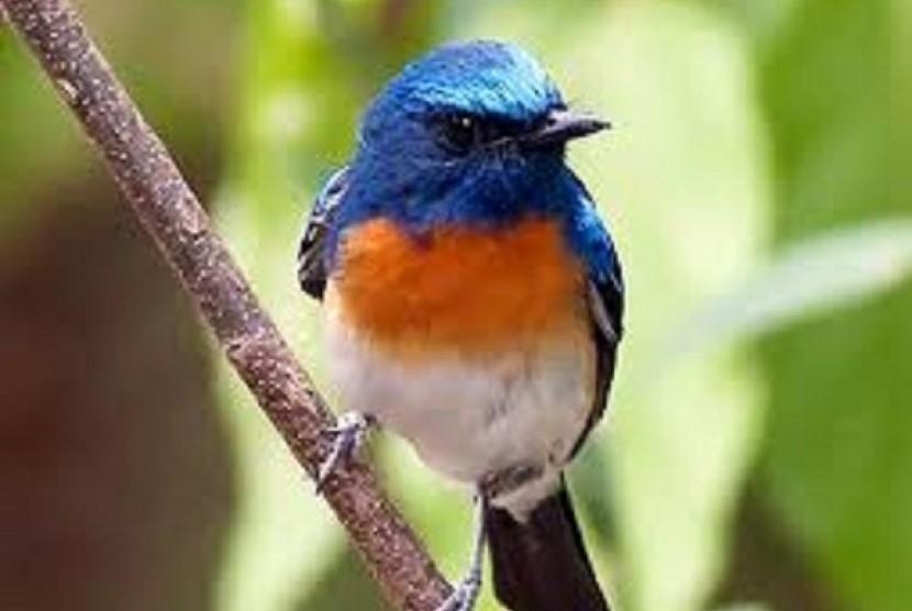 Burung (ILustrasi)