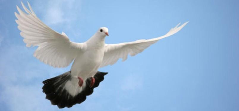 440 Gambar Hewan Burung Merpati Terbaik