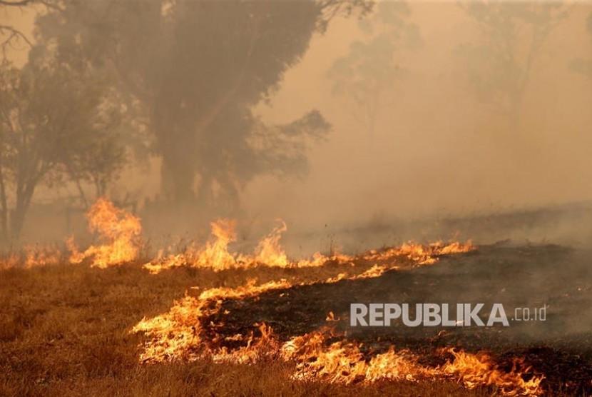 Angkatan Laut Australia Evakuasi Korban Kebakaran Hutan