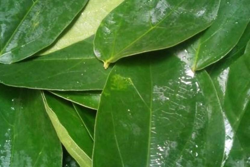 Daun cincau hijau (ilustrasi)