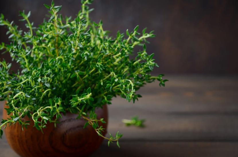 Tips Menanam Tumbuhan Herbal di Rumah Agar Awet