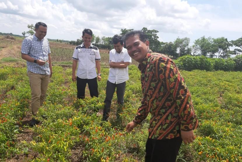 Direktur Jenderal Hortikultura, Suwandi saat panen cabai