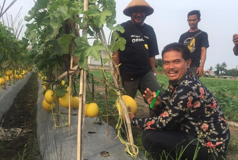 Direktur Jenderal Hortikultuta Kementerian Pertanian (Kementan), Suwandi saat meninjau lahan pertanian perkotaan seluas 26 hektare yang dikelola petani muda di Kampung Rawa Lini, Teluk Naga, Tangerang, Banten, Rabu (7/11)