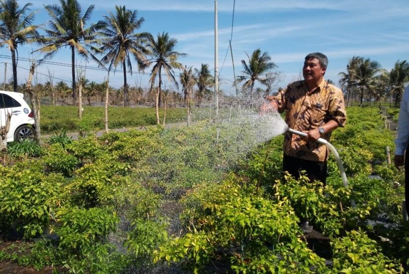 Dirjen Hortikultura menyirami tanaman cabai